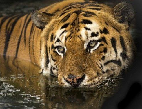 jungle safari in india 1