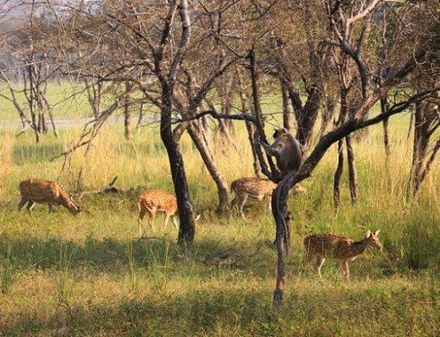 jungle safari in india 3