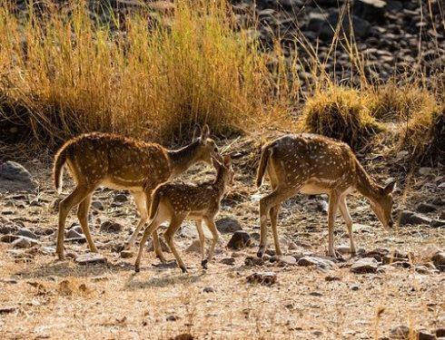 jungle safari in india 5