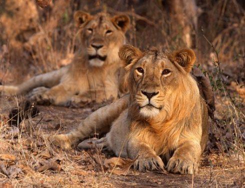 jungle safari in india 6